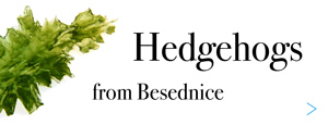 Hedgehogs from Besednice